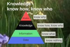 Data Information Knowledge pyramid